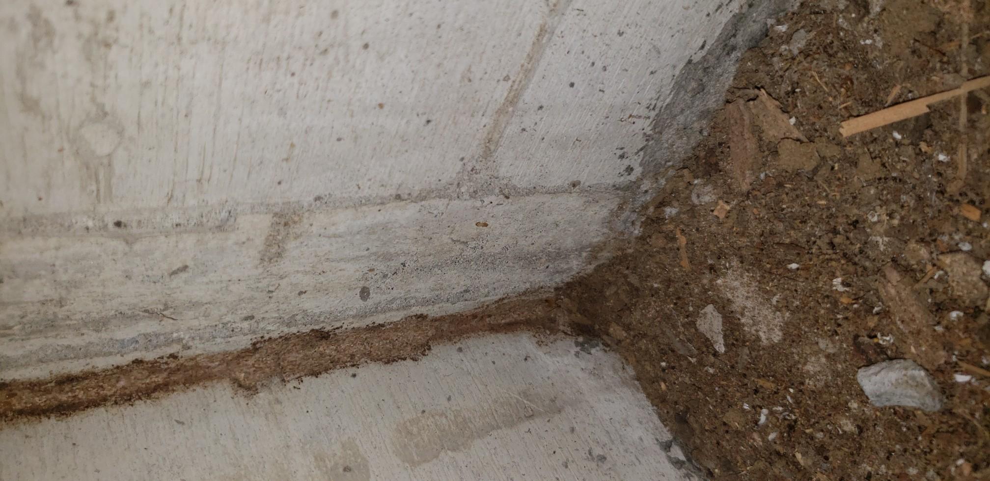 和室畳を撤去 蟻道を発見
